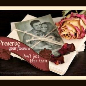 preserve your flowers don't dry them