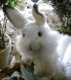 Snowy stuffed rabbit