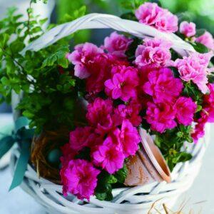 blooming indoor garden